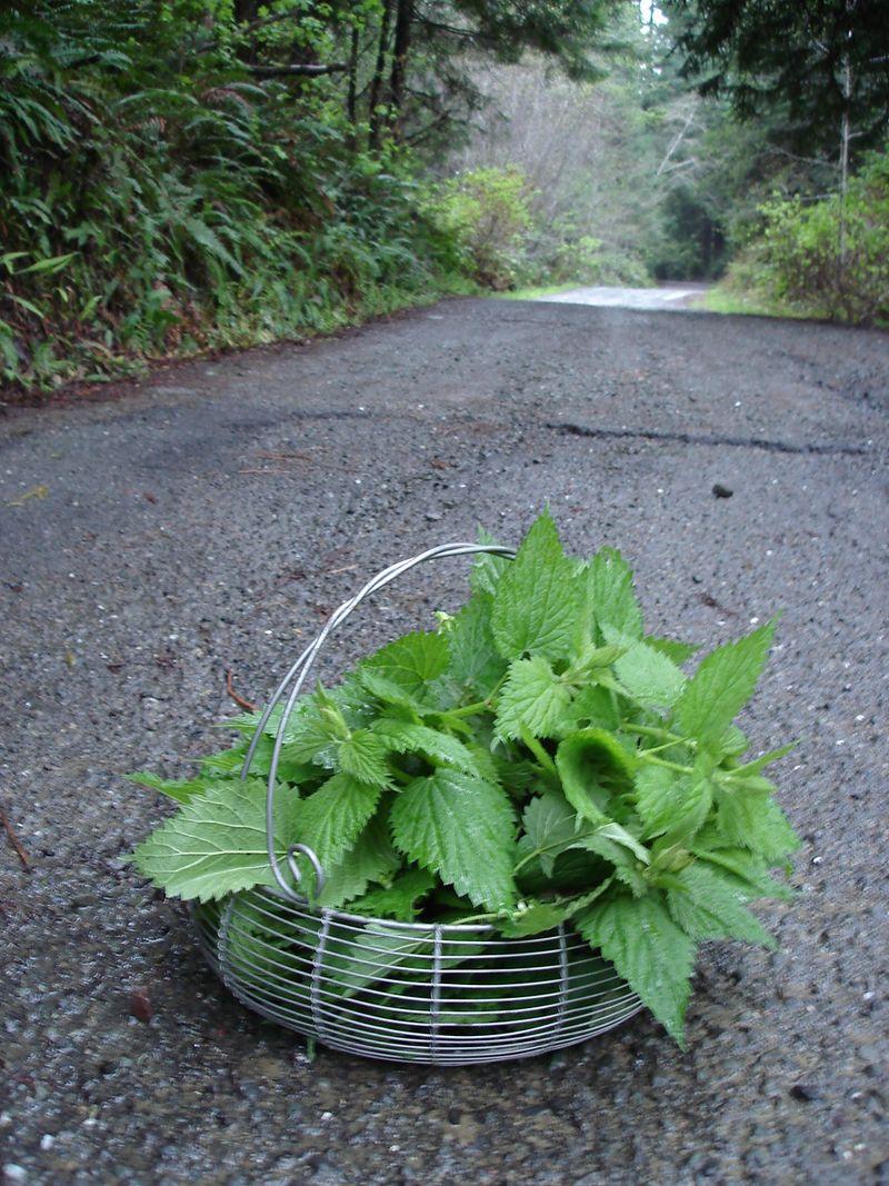 Nettle basket